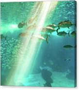 Underwater Background With Sunbeams Canvas Print
