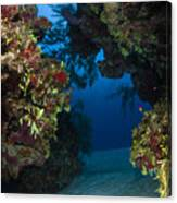 Underwater Crevice Through A Coral Canvas Print