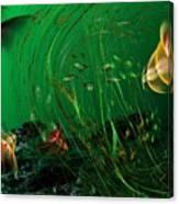 Underwater Wonderland  Diving The Reef Series. Canvas Print