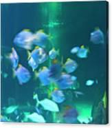 Underwater05 Canvas Print