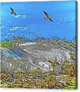 Uninhabited Beach  Canvas Print
