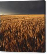 United States, Kansas, Summer Thunder Canvas Print