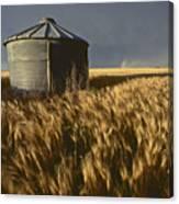 United States, Kansas Wheat Field Canvas Print