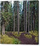University Of Alaska Fairbanks Trail System Canvas Print