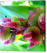 Unknown Flower Seeds Canvas Print