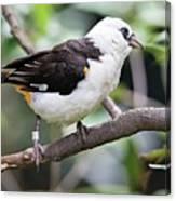 Unknown White Bird On Tree Branch Canvas Print