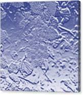Unripe Blackberries In Blue  Canvas Print
