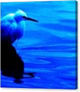 Unseen Chain Of Egret Canvas Print