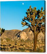 Untouched Joshua Tree National Park Canvas Print