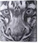 Up Close Clouded Leopard Canvas Print
