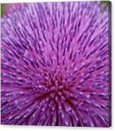 Up Close On Musk Thistle Bloom Canvas Print