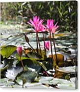 Up Close Water Lilies  Canvas Print