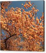Up To The Cherry Flowers Canvas Print