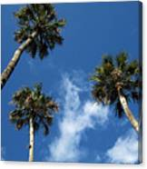 Up To The Sky Palms Canvas Print