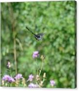 Up, Up And Away-black Swallowtail Butterfly Canvas Print