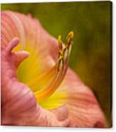 Uplifting Lily Canvas Print