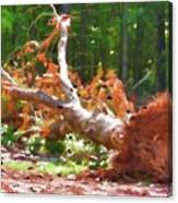 Uprooted Trees Canvas Print