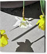 Upside Down Daffodils Canvas Print