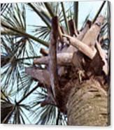 Upward Palm Canvas Print