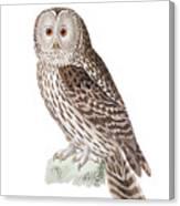 Ural Owl Canvas Print