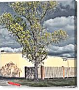 Urban Cottonwood Canvas Print