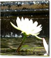 Urban Lily Canvas Print