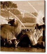 Urban Seahorse Canvas Print