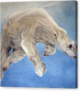 Ursus Maritimus Two Canvas Print