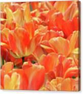 United States Capital Tulips Canvas Print