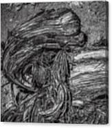 Utah Juniper Remains  Canvas Print