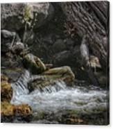 Utah Stream Canvas Print