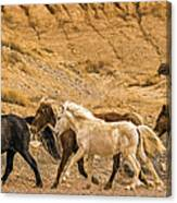 Ute Mountain Wild Horses On The Run Canvas Print