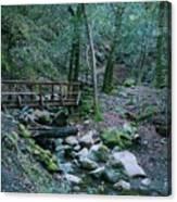 Uvas Canyon Bridge Canvas Print