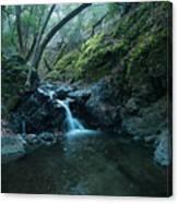 Uvas Canyon Waterfall II Canvas Print