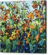 Vadasz Sunflowers Canvas Print