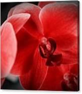 Valentine Orchid Canvas Print