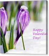 Valentines Day Crocuses Canvas Print
