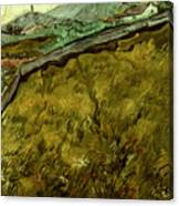Van Gogh: Field, 1890 Canvas Print