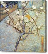 Van Gogh: Peartree, 1888 Canvas Print
