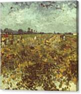 Van Gogh: Vineyard, 1888 Canvas Print