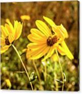 Variableleaf Sunflower Canvas Print