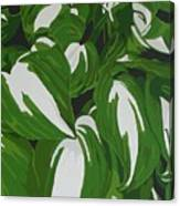 Variegated Hostas Canvas Print
