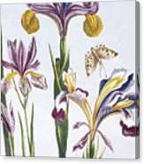 Variegated Iris Canvas Print