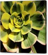 Variegated Succulent Canvas Print