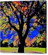 Oak Autumn Vasona Canvas Print