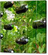Vegetable Growing In Used Water Bottle 4 Canvas Print