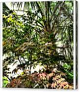 Vegetation Takeover Canvas Print