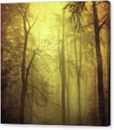 Veiled Trees Canvas Print