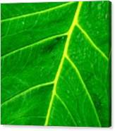 Veins Of Green Canvas Print