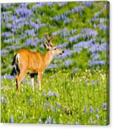 Velvet On Lupine Canvas Print